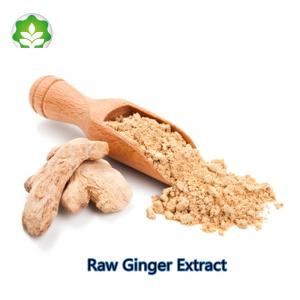 China natural health raw ginger extract Zingiber officinale anti inflammatory and hair growthing on sale