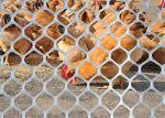 Wear Resistance Plastic Poultry Netting For Chicken Duck Feeding And Animal Protect