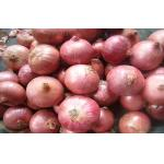 Sweet Red Natural Fresh Onion Bulbs Contains Rich Microelement For Market, The fleshy scales, Light yellow and soft
