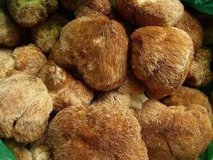 China Natural Lions mane mushroom extract,Hericium Extract, Hericium Erinaceus Extract 20%,4:1 on sale