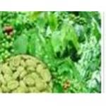 Vert del café de Extrait de grains de (vert de grains de cafe P.E)