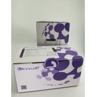 Human Makorin Ring Finger Protein 3 (MKRN3) ELISA Kit