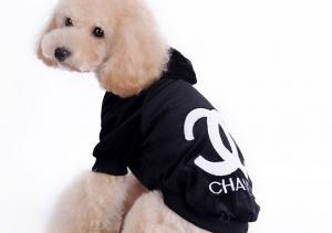 bichon poodle black