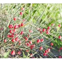 herb ephedra, herb ephedra Manufacturers and Suppliers at