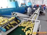 Easy Operation Lemon Juice Processing Line Machinery In Silver Color CFM-FD-200