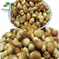 New Dried Horsebean Legume Crops Fresh Green Fava Beans High Quality Agriculture Products