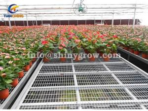 China Stationary Metal Greenhouse Benches for Commercial Nursery on sale