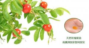 China best rosehip oil for face,best rosehip oil for wrinkles,	cheap rosehip oil on sale