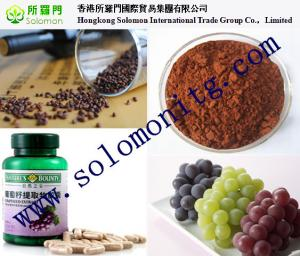 China herbal medicine grape seed extract free samples 95% opc --Vitis vinifera L on sale