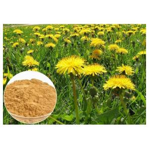 China Dandelion Root Herbal Plant Extract Brown Color Powder 80 Mesh For Digestive Aid on sale
