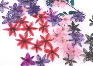 China Time Gems Decorations DIY Pressed Flowers / Hand Pressed Flowers Multicolor on sale