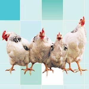 China Complex Enzymes for Poultry on sale