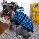 los abrigos de invierno para los perros, persiguen las capas calientes, abajo cubren para los perros
