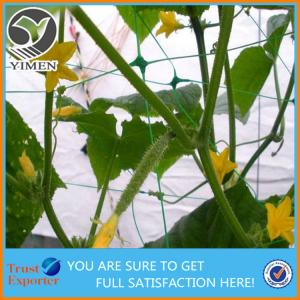 China Hot Sale Plastic Plant Climbing Net Plant Support Net makes plants grow better and healthy on sale