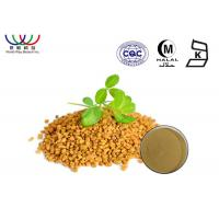 Fine Yellowish Brown Fenugreek Extract Powder Herbal Medicine For Men