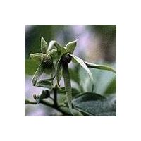 China Ylang Ylang Oil, Vetiver Oil on sale
