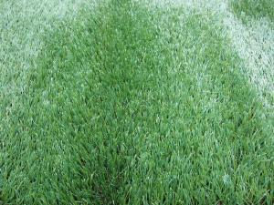 China 11000Dtex Four Coloured Outdoor Artificial Commercial Artificial Grass for Garden 40mm on sale