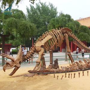 China Museum Quality Fossil Artificial Dinosaur Skull Model on sale