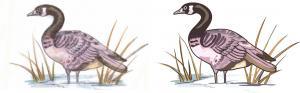China 芸術の野ガモのCandianのガチョウのガチョウの鳥fow_6を方向を変えて下さい on sale