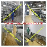China Industrial gelatin15-280bloom China factory good quality on sale