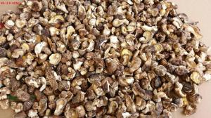 China Organic  shiitake mushroom whole Dried Shiitake Mushroom in bulk on sale