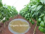 China Fertilizers Agricultural Chicken Manure Mixing Amino Calcium Boron 100% Water Soluble wholesale