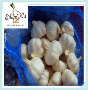 China buy nature white garlic size 5 5.5cm top selling garlic on sale