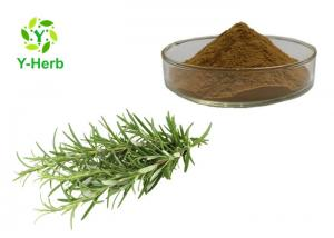 China Rosemary Herbal Extract Powder Rosmarinic Acid 10% 20% Ursolic 25% Carnosic Acid 5%-98% on sale