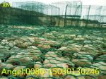 Cheap Price Galvanized Gabion Boxes Wire Mesh/Gabion Mattress / Gabion
