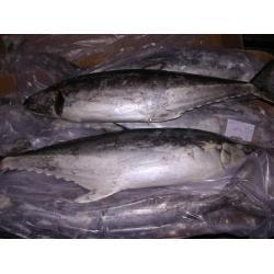 Frozen tuna fish price frozen tuna fish price for Tuna fish price