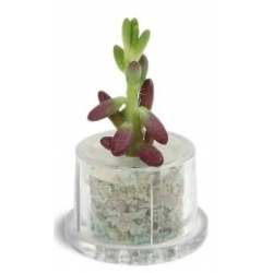 China PET Tree 1,With Plant,Pocket Plant,Mini Garden on sale