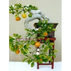 China BONSAI FAKE BONSAI FAKE 12 on sale