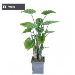 China Indoor home decorative artificial bonsai tree for sale and f on sale