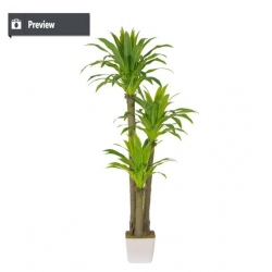 China New products on china market outdoor ficus tree bonsai palm t on sale