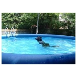 Dog Swimming Pools Dog Swimming Pools Manufacturers And Suppliers At
