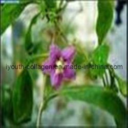 China Natural Medlar Bee Pollen, Health Food on sale