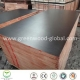 China 3mm / 30mm Pine Film Faced Marine Plywood Sheet on sale