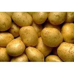 China Potato Powder on sale