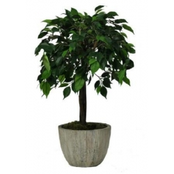 China Artificial Ficus Topping Tree 60cm on sale