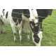 China Cattle Fence,Field Fence on sale