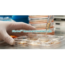 China Human Bone Joint PrimaCell: Normal Synovial Cell on sale
