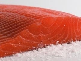 Quality Salmon for sale
