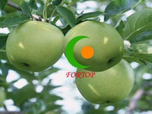China Granny Smith Apple on sale