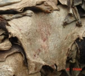 China Cow and buffalo hides on sale