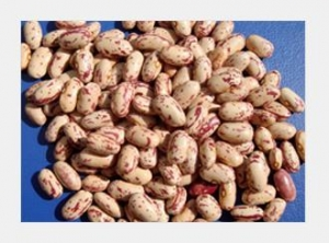 China Light Speckled Kidney Beans(Long Shape\Round Shape) on sale