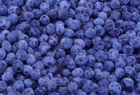 China IQF fruit iqf wild blueberry on sale