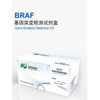 B-raf mutation test kit