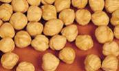 China Hazelnut on sale