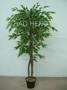 China 150CM VAR-FICUS TREE on sale