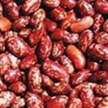 China Red Kidney Beans (Rajma) on sale